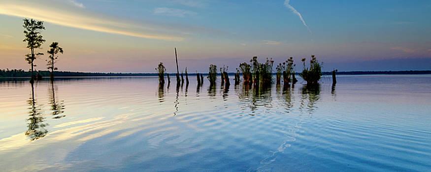 Dismal Swamp 2016 by Kevin Blackburn