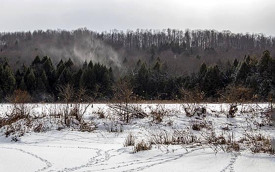 Doc Lee Rd Snow Tracks by Frank Morales Jr