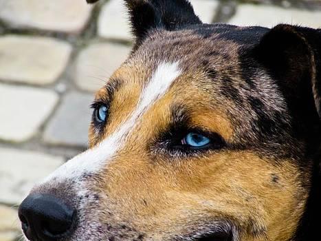 Dog by Cesar  Vieira