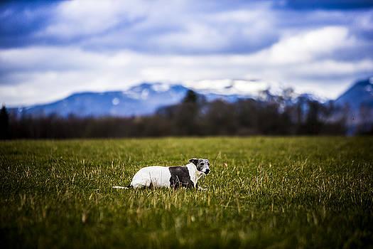 Dog in field by Michael Schofield