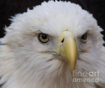 Paulette Thomas - Eagle Eye