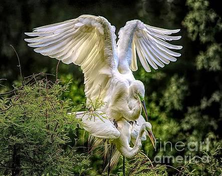 Egret Love by Paulette Thomas