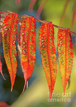 Fall... by Nina Stavlund