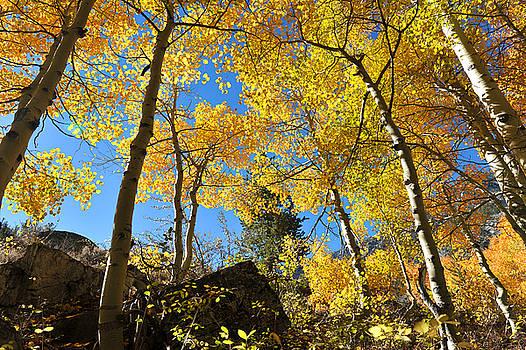 Fall season in Bishop Creek by Dung Ma