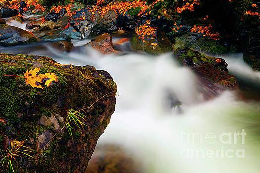 Fall Surge by Mike Dawson