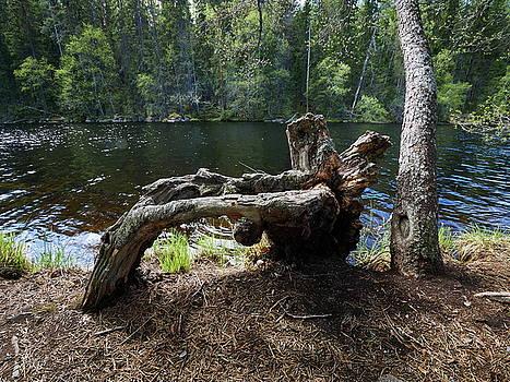 Fallen by Jouko Lehto
