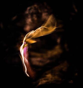Flame Art by Steven Poulton