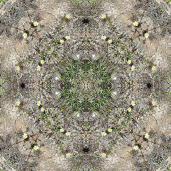 Flowers by Jesus Nicolas Castanon
