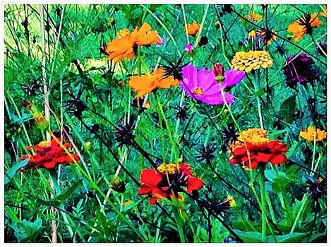 Flowers Of Summer by Debra Lynch