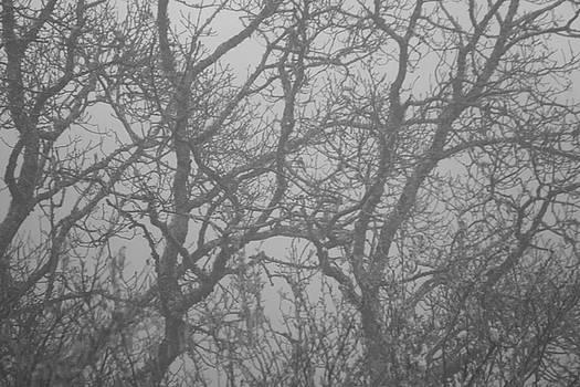 Foggy by Frances Lewis