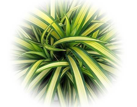 Foliage by Ajithaa Edirimane