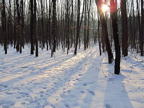 Wojtek Kowalski - Forest