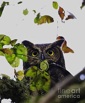 Hooo's there by Tim Hauf
