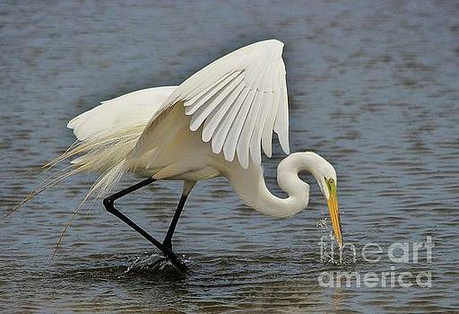 Paulette Thomas - Great White Egret Fishing