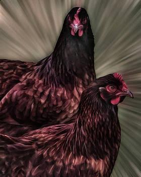 2 Hens by Philip A Swiderski Jr
