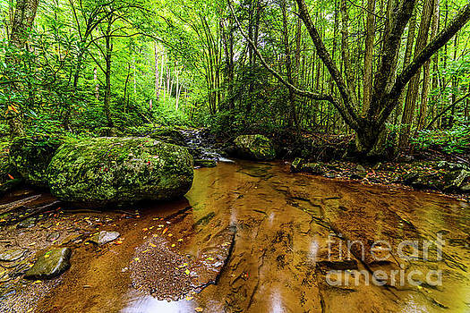Hills Creek Monongahela National Forest by Thomas R Fletcher