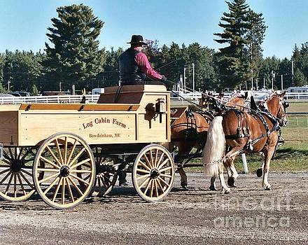Sandra  Huston - 2- Hitch Haflinger Draft Horses