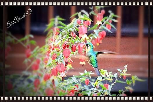 Hummingbird by Pascal Schreier
