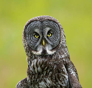 I See You by Doug Lloyd