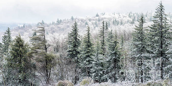 Iced Trees Highland Scenic Highway by Thomas R Fletcher
