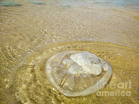 Jellyfish on the beach by Shay Levy