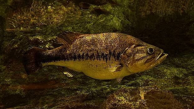 Joe Duket - Largemouth Bass