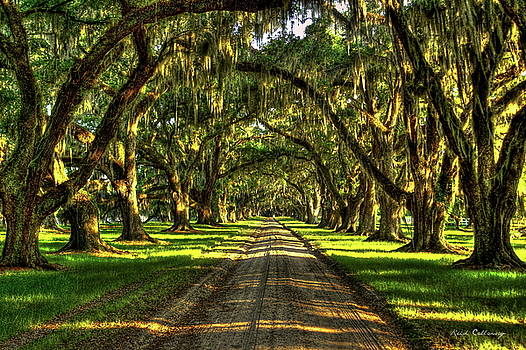 Live Oaks of Tomotley Plantation South Carolina Low Country Art by Reid Callaway