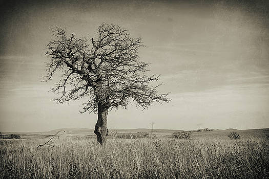 Lone Tree by Ricky Barnard