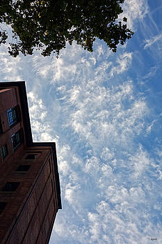 Dana Sohr - Looking Up #3