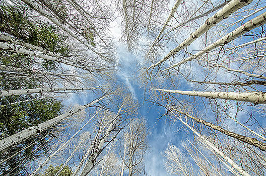 Lost Among The Aspen Trees by Cathy Neth