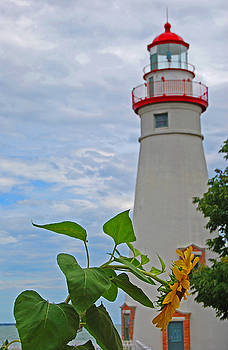 Marblehead Sunflower by Peter  McIntosh