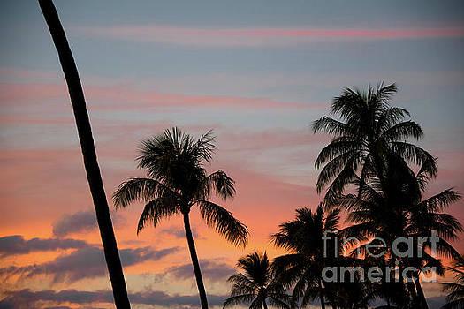 Maui Palm Sunset by Kelly Wade