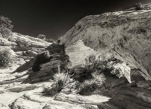 Mesa Arch by Thomas Schreiter