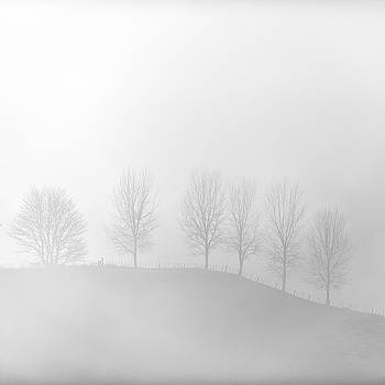 Misty Winter Trees by Russ Dixon