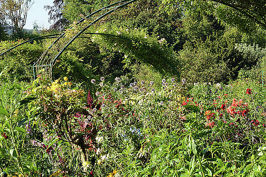 Monet's Garden at Giverny by Harvey Barrison
