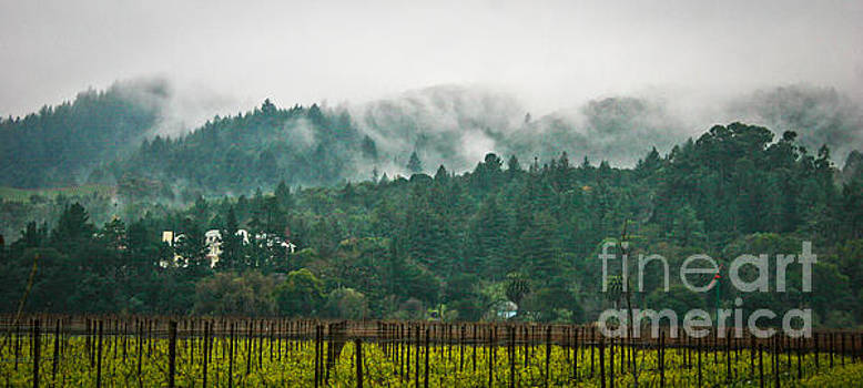 Napa Valley, California by Richard Smukler