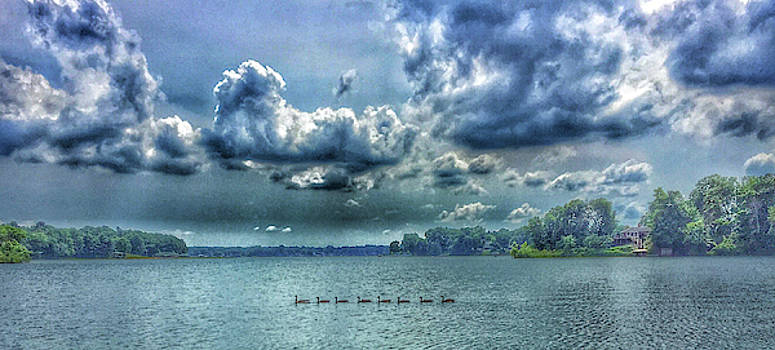 Geese on Lake by Mary McGrath