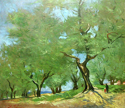 Olive Grove by Zois Shuttie