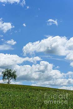 One Tree Hill by Thomas R Fletcher