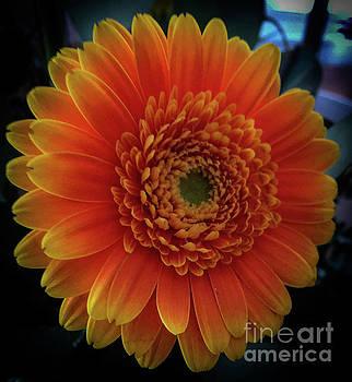 Orange by Joseph Yarbrough