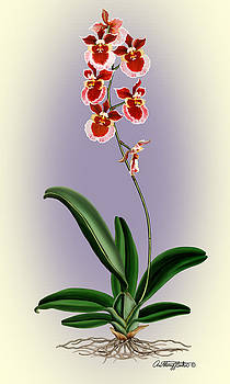 Orchid by Anthony Seeker