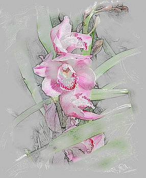 Orchidaceae by Don Wright