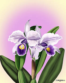 Orchids by Anthony Seeker