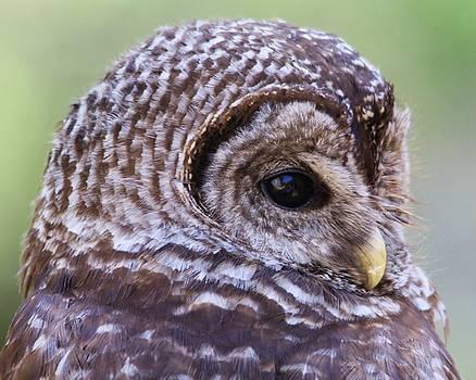 Paulette Thomas - Owl Up Close