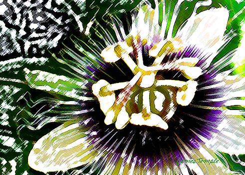James Temple - Passion Flower