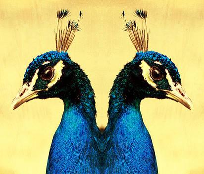 Peacock by Falko Follert