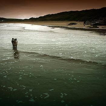 Angel  Tarantella - Pembrokeshire