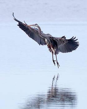 Perfect Landing by Bob Stevens
