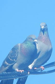 2 Pigeons on the Line by Mozelle Beigel Martin