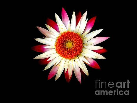 Pink Flower by Sylvie Leandre